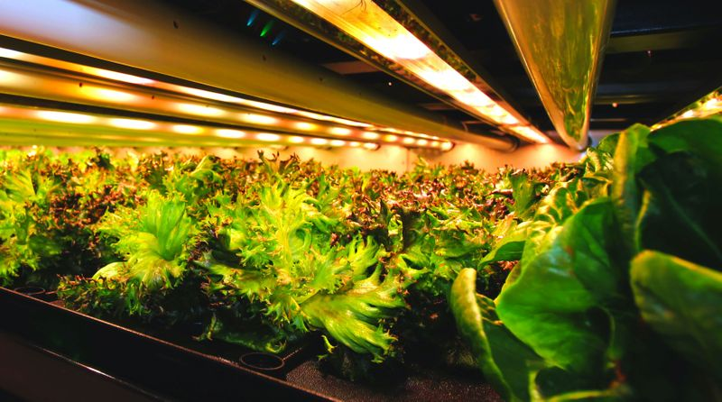 Investors plant money in indoor farms amid pandemic food disruptions