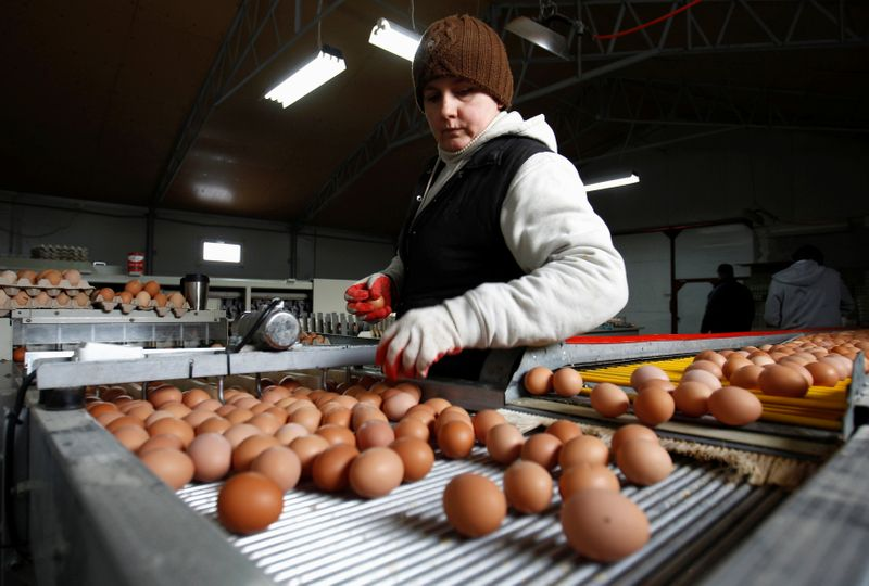 FILE PHOTO: A worker sorts eggs at a chicken farm in Brudnice