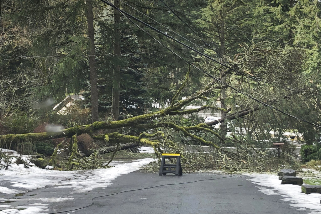 In this photo provided by Chris Moore, a downed tree tangled up with power lines blocks the road leading out of a neighborhood in Lake Oswego, Ore., on Wednesday, Feb. 17, 2021. More than 150,000 customers remain without power in the greater Portland, Ore., region nearly a week after a massive ice storm downed power lines and sent trees crashing onto houses and blocked roads. (Chris Moore via AP)