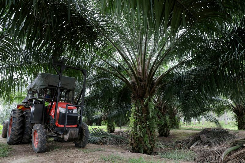 FILE PHOTO: A mini tractor grabber collects palm oil fruits at a plantation in Pulau Carey, Malaysia