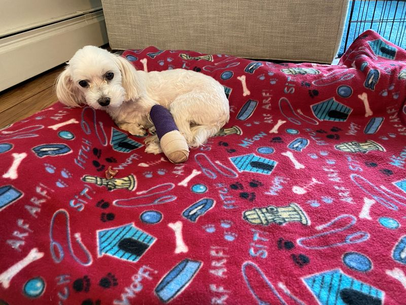 U.S. insurance regulators ready proposed law for fast-growing pet coverage