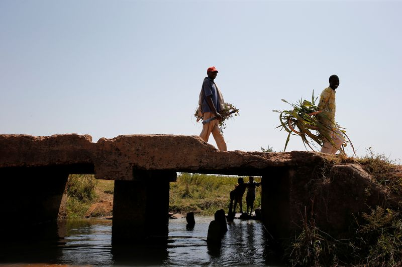 Men holding leaves pass through a bridge on the outskirt of Zaria in Nigeria's northern state of Kaduna