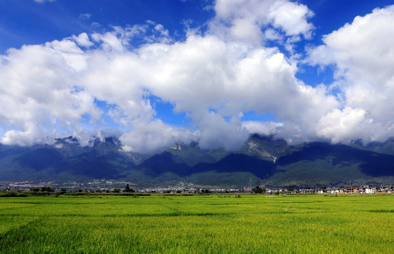 FILE PHOTO: A general view shows rice crops in the farmland on the outskirts of Dali