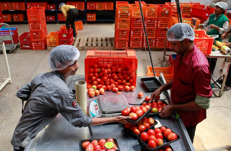 Employees arrange tomatoes before weighing them at a Big Basket warehouse on the outskirts of Mumbai