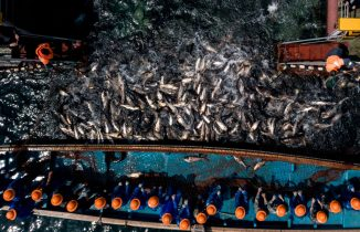 TOPSHOT - This aerial picture taken on March 29, 2018 shows Chinese fishermen drawing a net as they catch fish at the Qiandao lake in Zhejiang province. - On a clear sunny morning in eastern China, the surface of Qiandao Lake boils with tens of thousands of thrashing carp as they are swept into the nets of fisherman like Ye Zhiqing. Covering an area nearly the size of Singapore and known for its clear waters, Qiandao Lake is a major aquaculture production centre for eastern China, and is notable for the unique methods of fishermen like Ye. (Photo by Johannes EISELE / AFP) (Photo credit should read JOHANNES EISELE/AFP via Getty Images)
