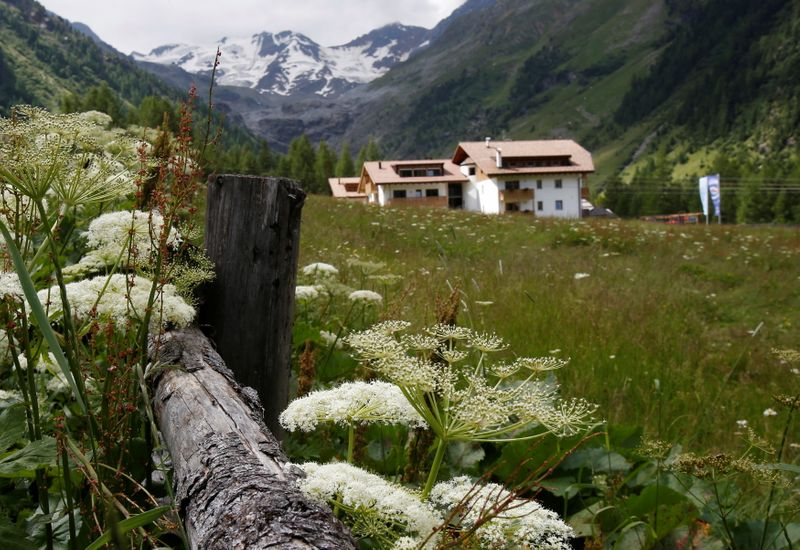 FILE PHOTO: Flowers are seen in front of the Ortler Group mountains in the northern Italian village of Sulden, in Alto Adige (South Tyrol) province