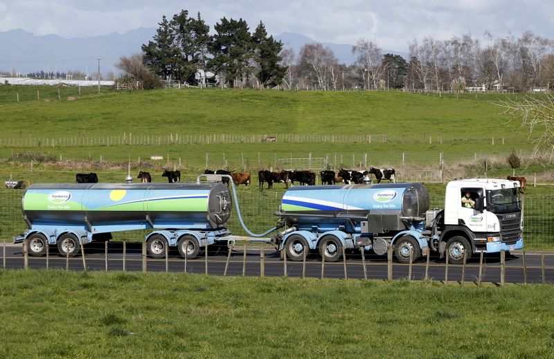 FILE PHOTO: File picture of a Fonterra milk tanker driving past dairy cows as it arrives at Fonterra's Te Rapa plant near Hamilton, New Zealand