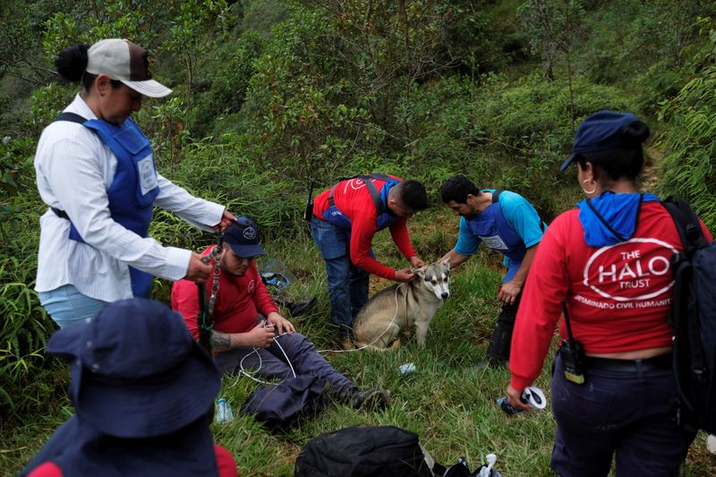 Members of the international landmine clearance charity HALO Trust search areas for landmines, in Carmen de Viboral