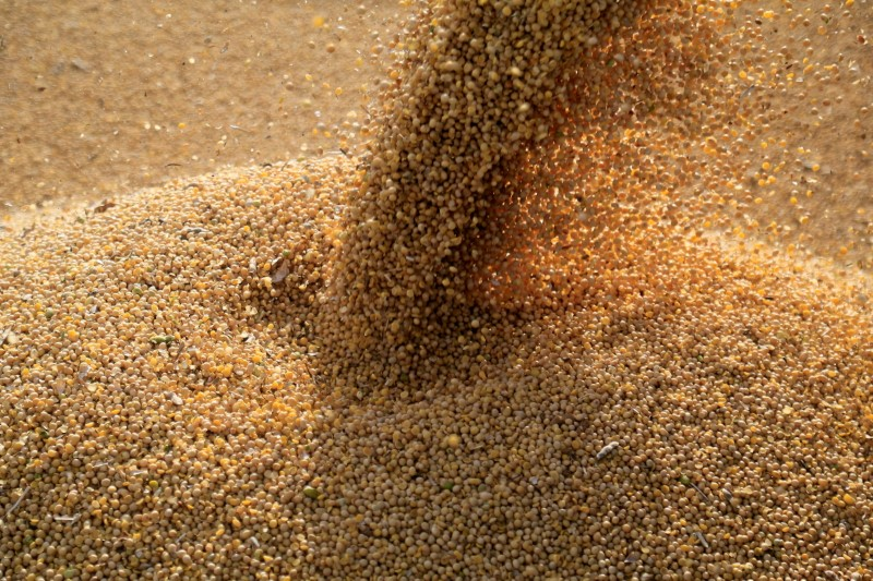 FILE PHOTO: Soybeans are loaded on to a truck