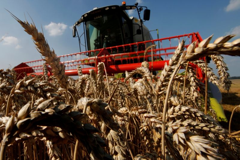 FILE PHOTO: A French farmer harvests his wheat crop in Bugnicourt in northern France